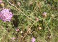 Piante e fiori nei pressi del Pozzo di Serraiola