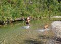 Divertimento per umani e cani al pozzo di serraiola