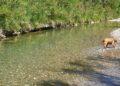 Le limpide acque del fiume Cornia all'altezza del pozzo di serraiola