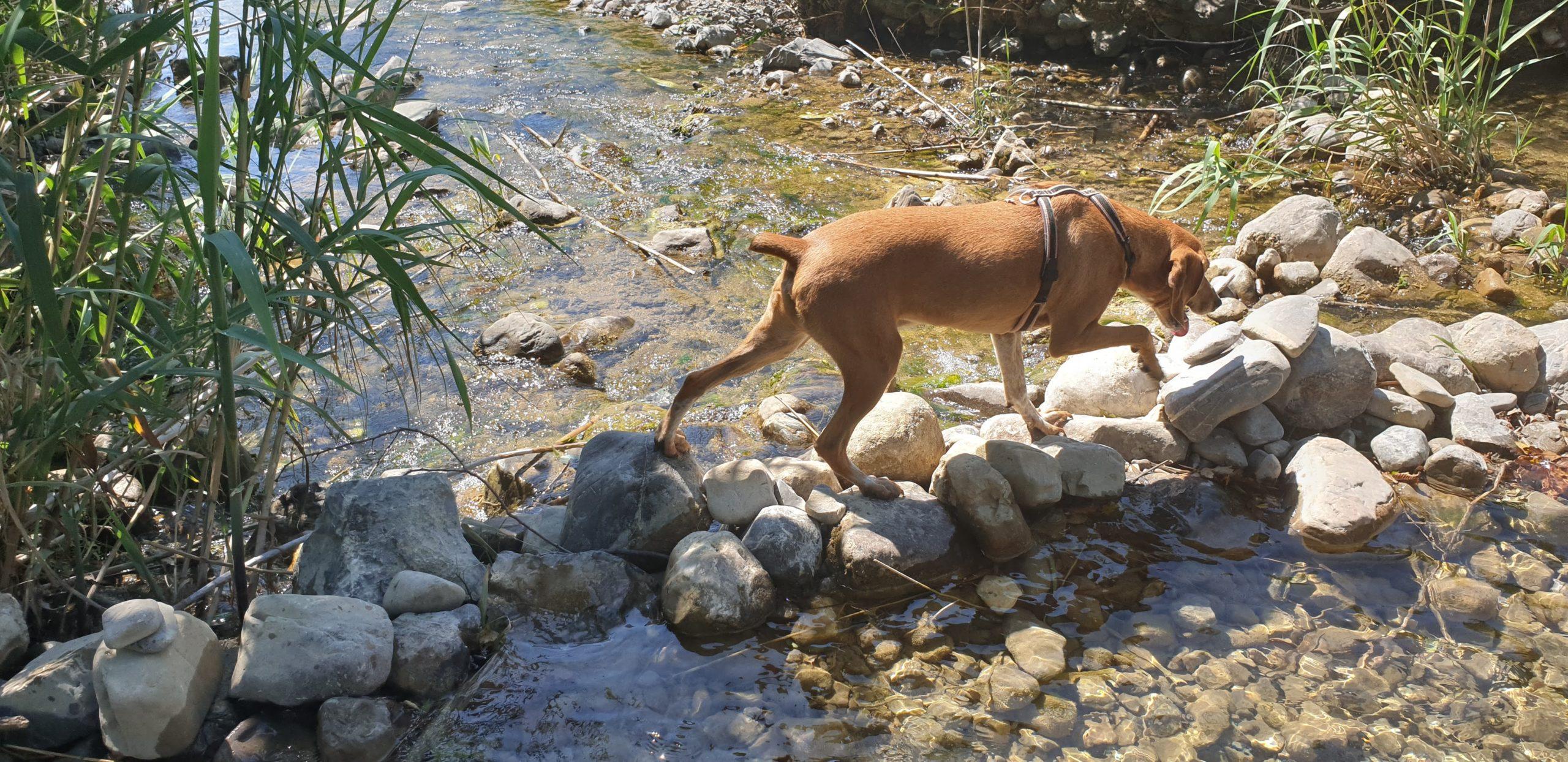 guado sul fiume cornia