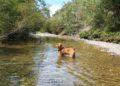 luogo ideale per cani pozzo di serraiola