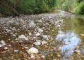 acque limpide fiume Cornia