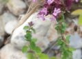 Fiori e piante nei dintorni del pozzo di serraiola