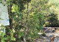 Cartello nascosto per le Terme abbandonate di San Michele alle Formiche