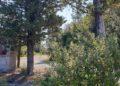 Dettaglio Parcheggio per l'Abbazia e le Terme abbandonate di San Michele alle Formiche